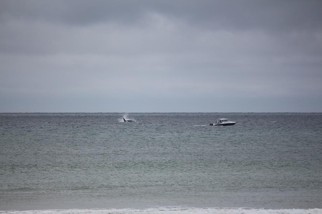 Две прогулки с китами